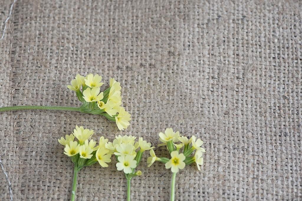 cowslip-yellowflower2